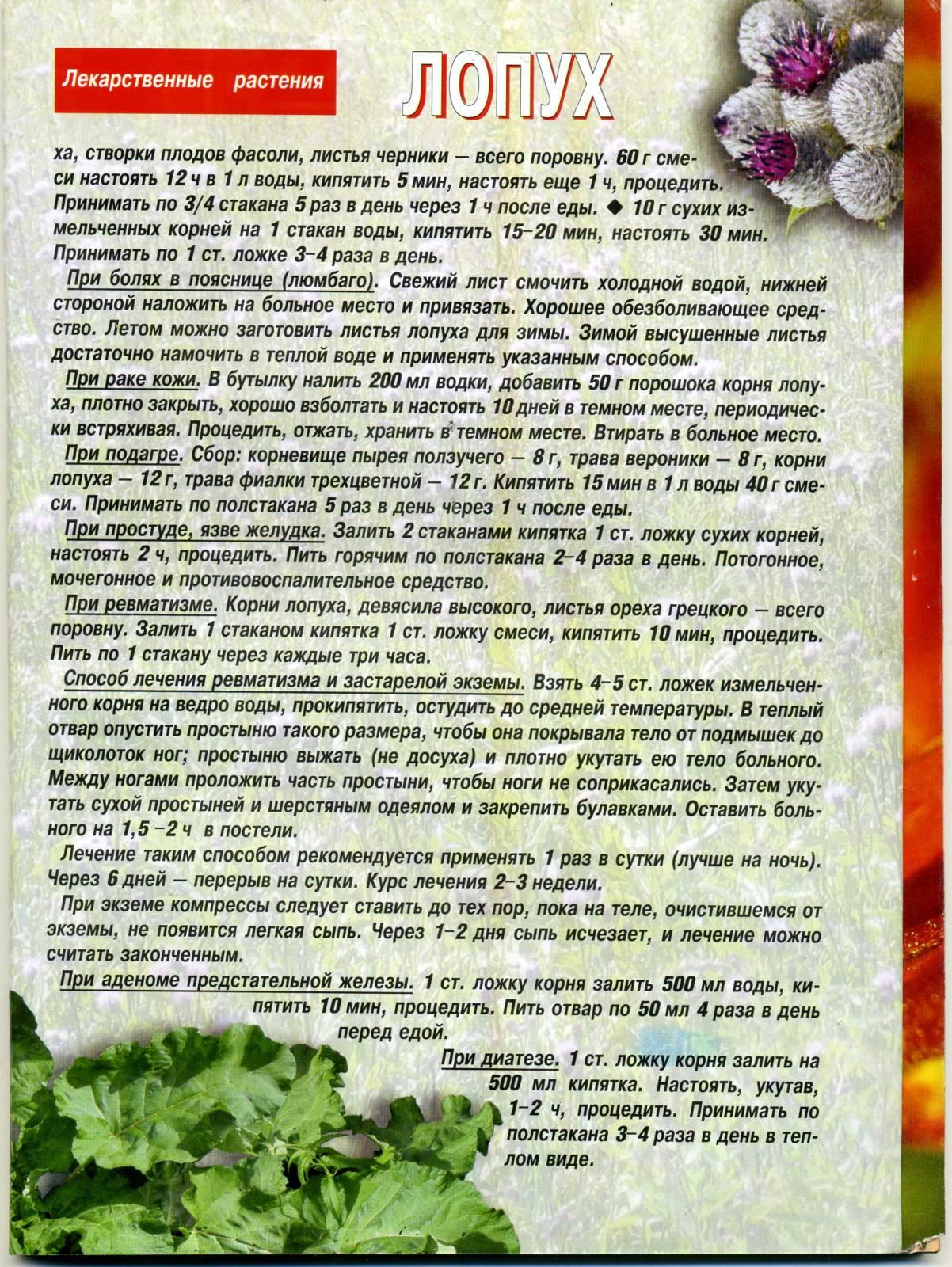 Тибетская схема настойки чеснока