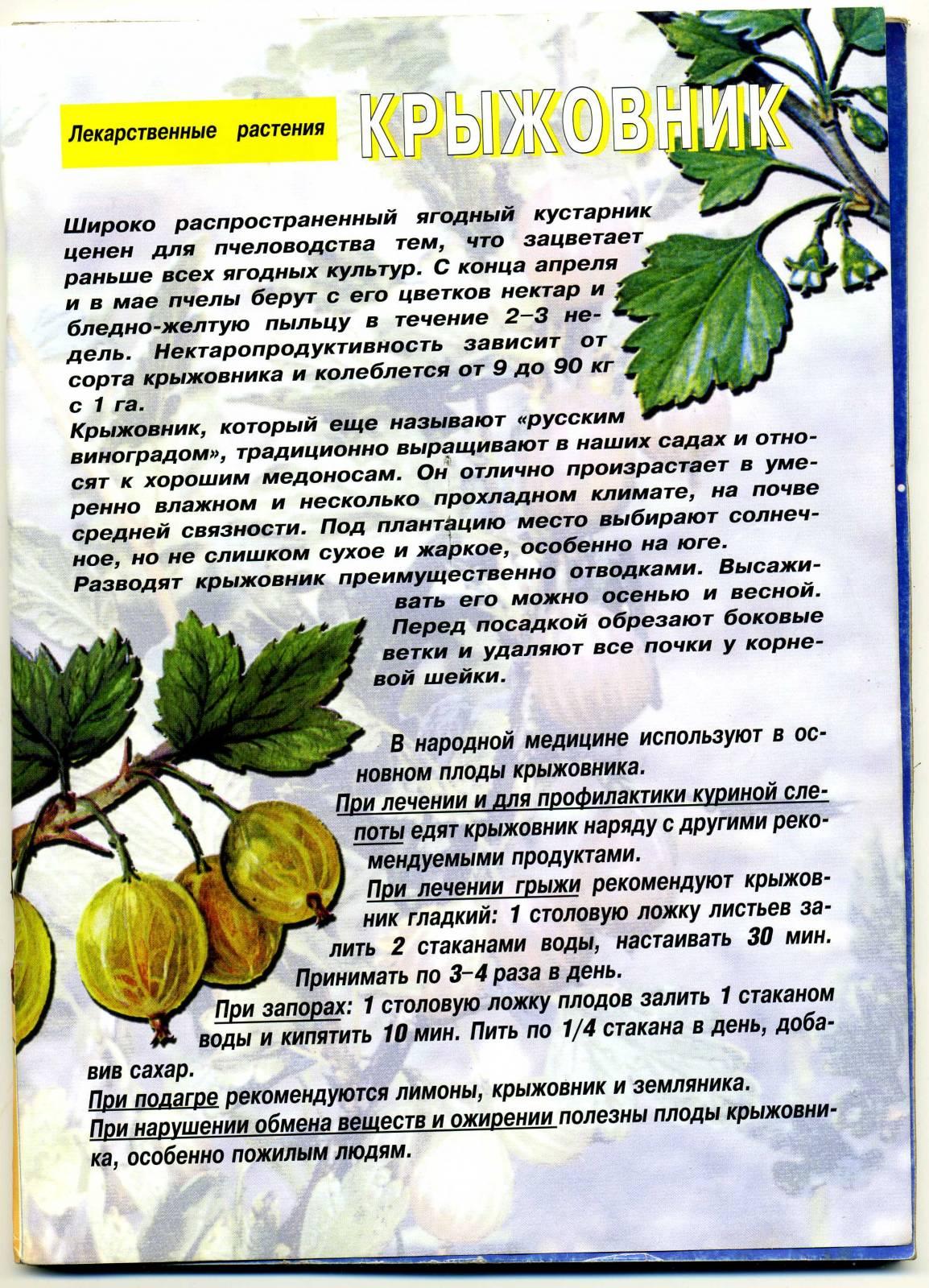 Рецепт из лекарственных растений